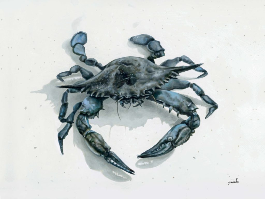 Blue Crab 1 - CoastLine Art